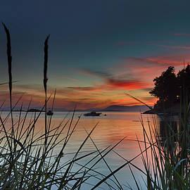 Sunset Through The Reeds - Thomas Ashcraft