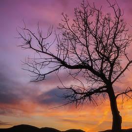 Darren White - Sunset Tree