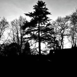 John S - Sunset. #sunset #tree #trees