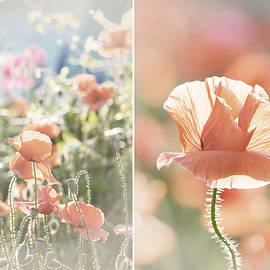 Sunshine and Poppies by Lisa Knechtel