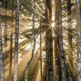 Sunshine Forest by Pierre Leclerc Photography