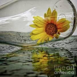 Ella Kaye Dickey - Sunshine in a Bottle - reflection