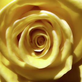 Johanna Hurmerinta - Sunshine Yellow