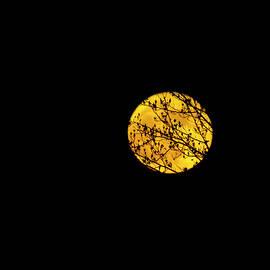 Super Moon  by Julieanne Case