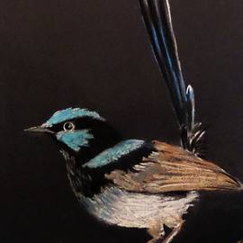 Anne Gardner - Superb blue wren