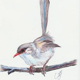 Anne Gardner - Superb fairy wren 3