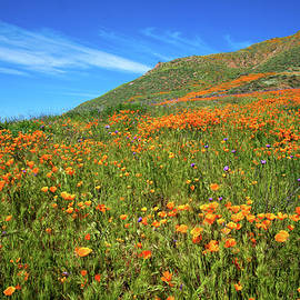 Lynn Bauer - Superbloom Hillside in Walker Canyon