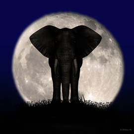 Brian Wallace - Supermoon Elephant Silhouette