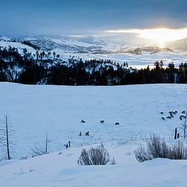Surise Elk Herd by D Robert Franz