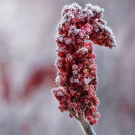 Susan Capuano - Surviving Winter