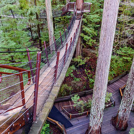 Suspended bridge in a subtropical forest