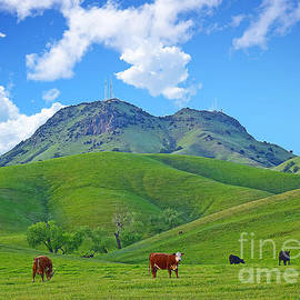 Michelle Zearfoss - Sutter Buttes Pastoral with cows