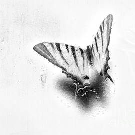 iMia dEsigN - Swallowtail Butterfly 01