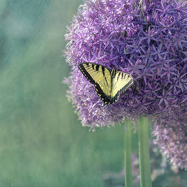 Swallowtail Butterfly In The Garden by Kim Hojnacki