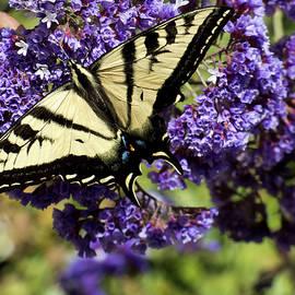 Swallowtail Heaven by Julieanne Case