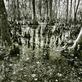 Swamp In Contrast by Andy Crawford