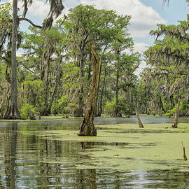 Swamp landscape  Louisiana by Patricia Hofmeester