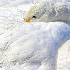 Leigh Lofgren - Swan Beauty