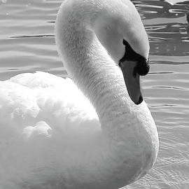Carol Groenen - Swan Elegance Black and White