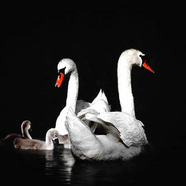 Janet Argenta - Swan Family Two