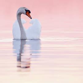Swan in Pink by Roeselien Raimond