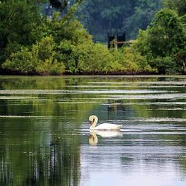 Cynthia Guinn - Swan Lake