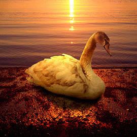 Yuri Lev - Swan Lake