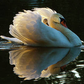 Janet Chung - Swan Mom and Baby