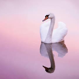 Roeselien Raimond - Swan Reflections