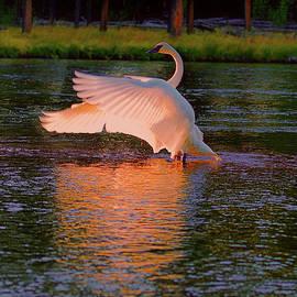 Lena  Owens OLena Art - Swan Sun Salutation
