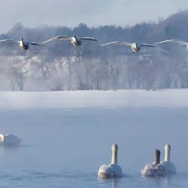 Patti Deters - Four Swans Landing