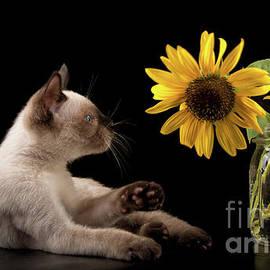 Swatting at Sunflowers