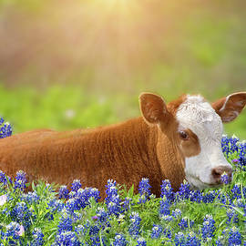 Sweet Baby in the Bluebonnets by Lynn Bauer