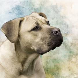 Sweet Cane Corso, Italian Mastiff Dog Portrait by Melissa Bittinger
