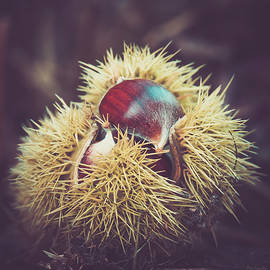 Sweet Chestnut by Wim Lanclus