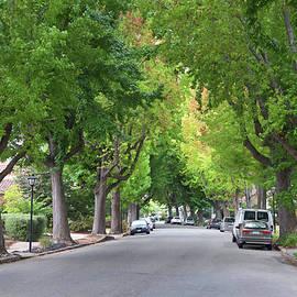 Sheila Fitzgerald - Sweet Gum Tree Neighborhood in Summer