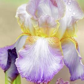 Sweet Iris Pastel by Regina Geoghan