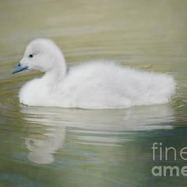 Teresa Wilson - Sweet Little Gosling
