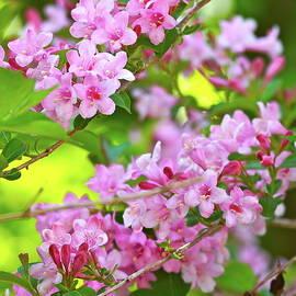 Ira Shander - Sweet Nature