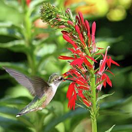 Sweet Nectar by Debbie Oppermann
