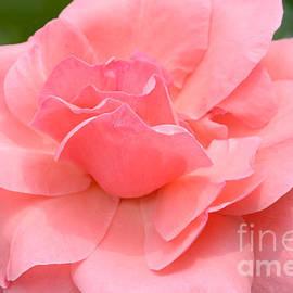 Sweet Summer Pink by Regina Geoghan