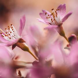 Jenny Rainbow - Sweet Taste of Spring