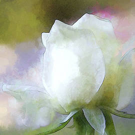 Sweet White Rose by Terry Davis