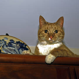 Tabby Cat by Sally Weigand