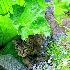 Sharon Talson - Tabby Under the Rhubarb