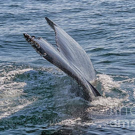 Tail fin of a big whale by Patricia Hofmeester
