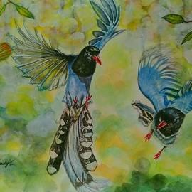 Jo lan Tao - Taiwan Blue Magpie
