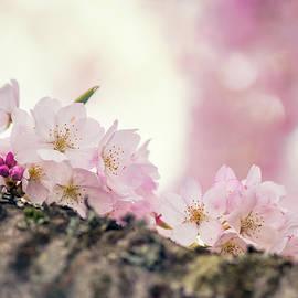 Kristopher Winter - Take Me High - Cherry Blossom - Sakura