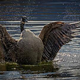 Taking a Bath by Inge Riis McDonald