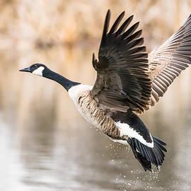 Steven Santamour - Taking Flight